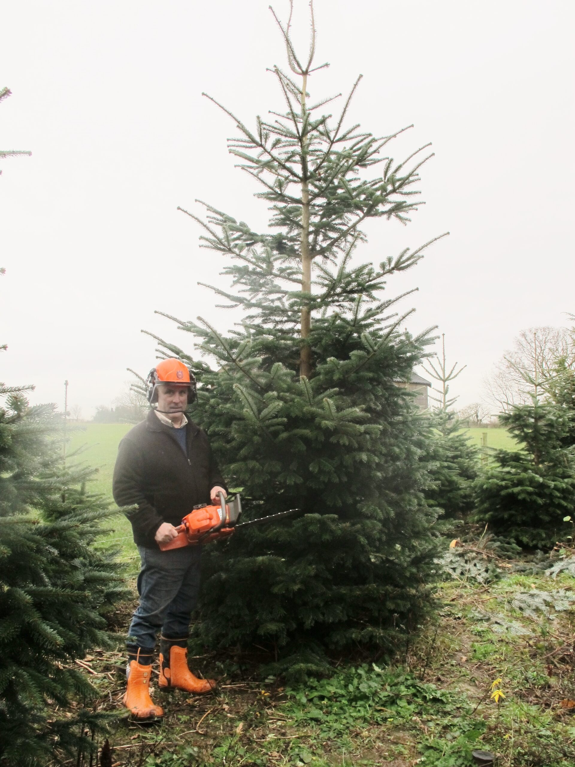 Your Christmas Tree Guide - Hollow Trees